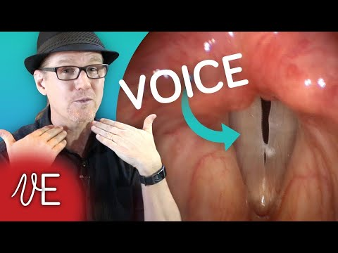 Vocal Cords in ACTION Video | How the human voice works | #DrDan 🎤