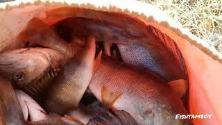 16 11 2018 Зимняя рыбалка