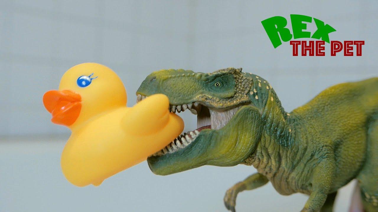 t rex vs rubber duck pet dinosaur rex fights rubber duckie a