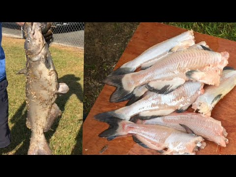 THE FISHING RODEO (catch and clean catfish)
