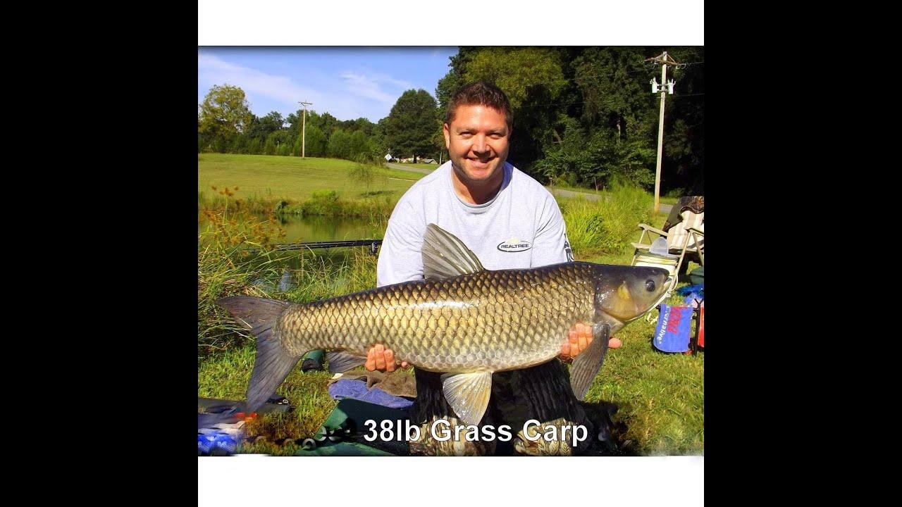 How to catch a grass carp 35