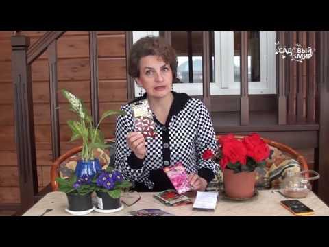видео: Что посеять в марте