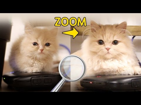 고양이 확대범 자수합니다 (6개월간 성장한 먼치킨 고양이 요지!) | 김메주와고양이들