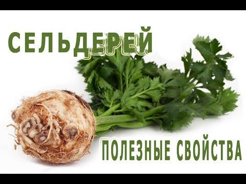 Сельдерей: полезные свойства корня, рецепты, вред, фото.