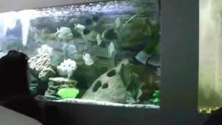 рыбы новосибирской области