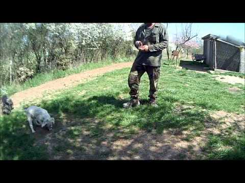 addestramento cani da tartufo perugia italy - photo#9