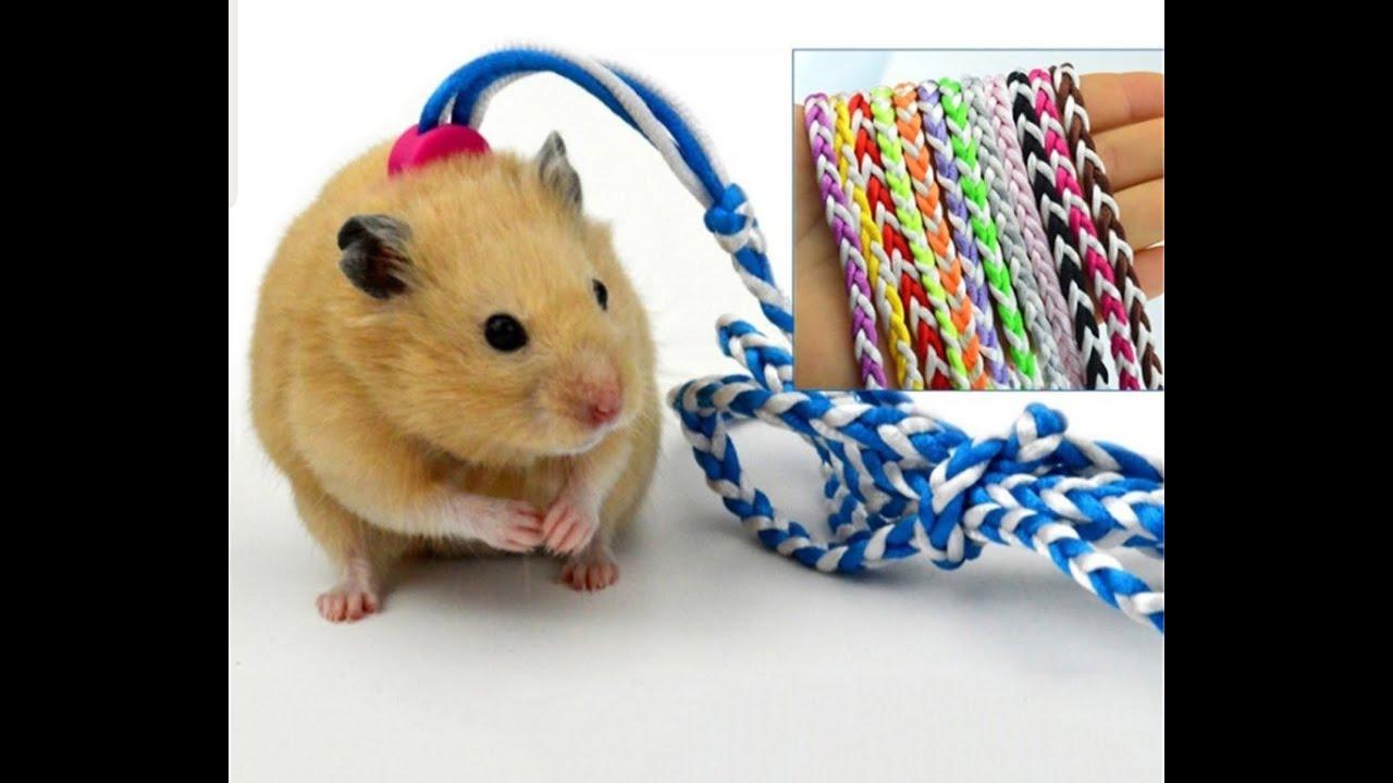 LoHa Pet Shop Phụ kiện thú cưng Dây dắt Hamster siêu cute