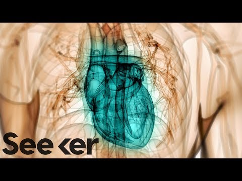 What Can Happen to the Human Heart After Months of Swimming? | The Swim