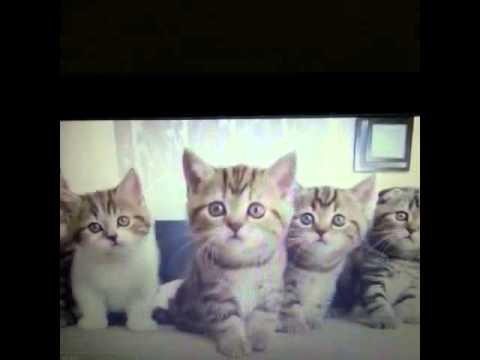 Zikir Ceken Kediler Vineturkiye Turk Komik
