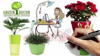 Интернет магазин Green Decor - сделаем жизнь зеленее...(, 2015-09-25T07:38:41.000Z)