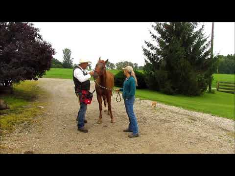 Equine Analyst Ed Crothers Addressing Equine Pain Problems