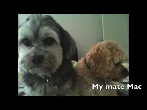 Tricks To Groom A Dog Faster