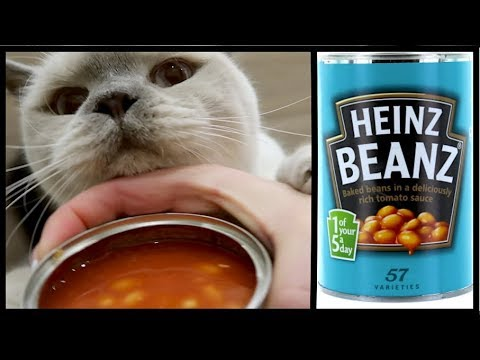DO CATS LIKE BEANS? & COPYRIGHT ISSUE | CHRIS & EVE