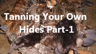 Tanning Your Own Hides Part-1