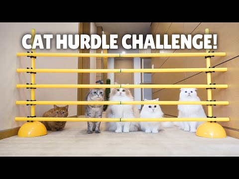 Cat Hurdle Challenge! Can My Cats Make the Jump? | Kittisaurus