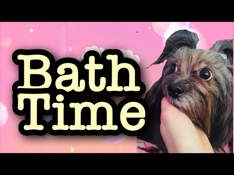 Bathing My Long Haired Shih Tzu Mix- My Dogs Grooming Routine