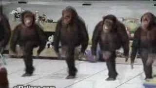 River Dancing Chimps
