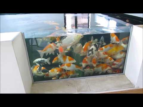 Koi Basic Water Quality Tests And What I Expect In My Pond's