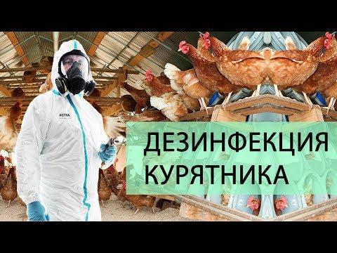 Дезинфекция курятника для кур несушек. О чем должен знать каждый птицевод?!