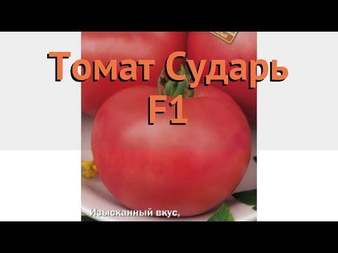 Томат обыкновенный Сударь F1 (sudar f1) 🌿 томат Сударь F1 обзор: как сажать семена томата Сударь F1