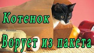 Котенок осматривает покупки и Ворует сосиски