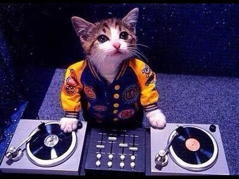 オモシロ猫ちゃんfunny cat