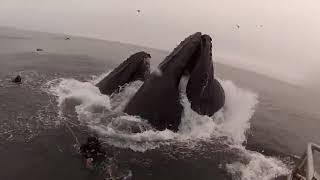 10 เหตุการณ์ประหลาด ที่เกิดขึ้นในทะเล,แม่น้ำ