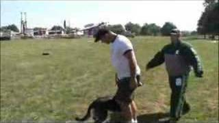 Dog Training- K9 Demonstration