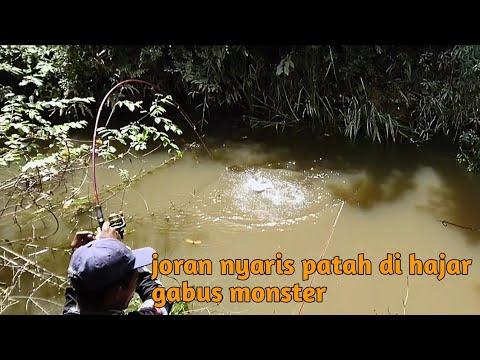 STRIKE TANPA HENTI MEMANCING IKAN GABUS MONSTER SAAT AIR KERUH..