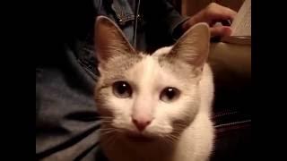 Приколы про кошек  Рыбки хочешь?/ Jokes about cats Fish want? Видео от SAFa