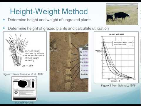Measuring Utilization of Herbaceous Vegetation