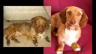 CBS Sunday Morning - Pet photographer's ambitious adoption