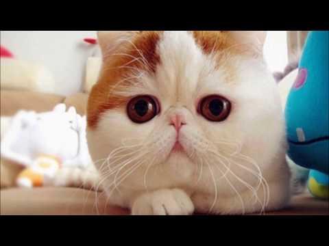 TOP 20 des plus beaux chats du monde !