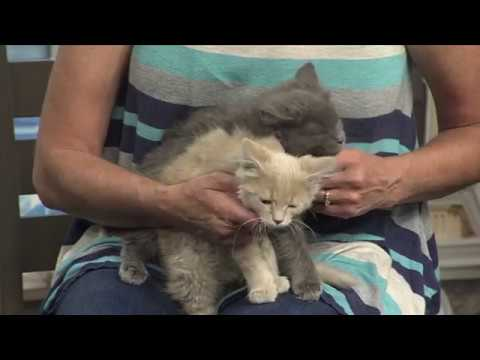 Pet of the Week With Kittens