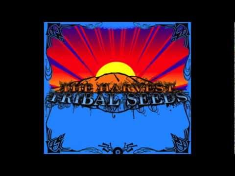 Tribal seeds- The Harvest(lyrics)
