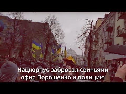 Нацкорпус забросал свиньями офис Порошенко и полицию | Страна.uа thumbnail