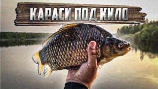 ВОТ ЭТО ЛАПТИ ПОД КИЛО КАРАСЬ НА ФЛЭТ Рыбалка на Лесном Озере с Ночевкой