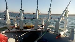 Рыбалка на Шардаре Сентябрь 2019