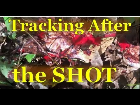 Bow Hunting - Tracking After The SHOT - Real Life Deer Hunting