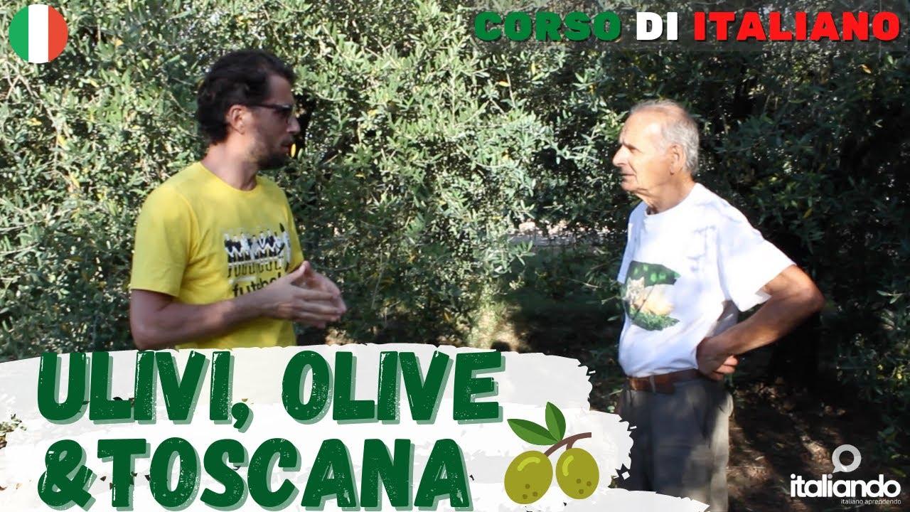 Vlog italiano Conversazione su Ulivi, Olive e Toscana con Roberto, produttore di Olio e vino Italia