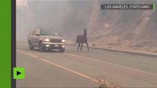 Un cheval prend l'autoroute pour échapper à un incendie de forêt en Californie