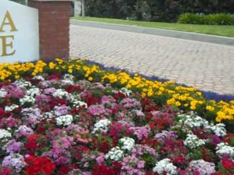 OMG What Were They Thinking Purple Yellow and Pink Colour Bedding Plants.AVI