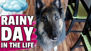 Day in the Life of a Belgian Shepherd Dog | What we do on a Rainy Day