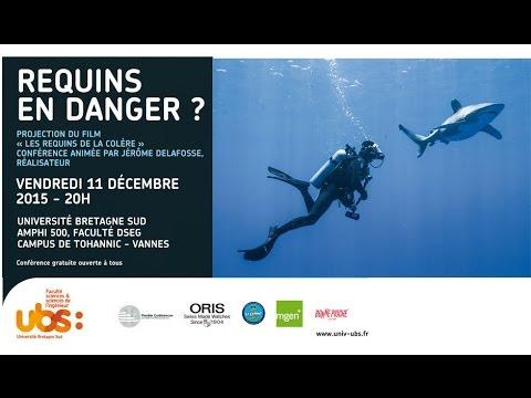 Planète conférences : Requins en danger - Débat en présence du réalisateur, Jérôme Delafosse.