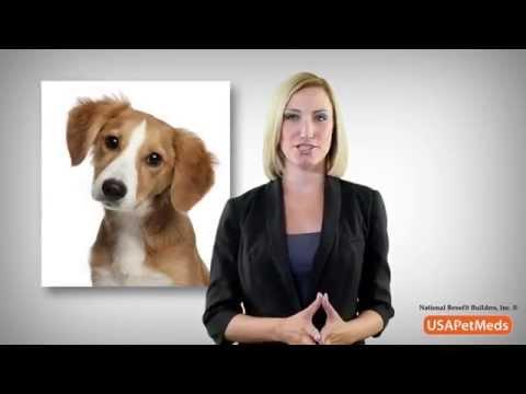 Pet Meds USA -  Free Rx Card - Best Prices on Pet Meds Online