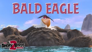 The Angry Birds Movie 2 |  Bird Watching Bald Eagle