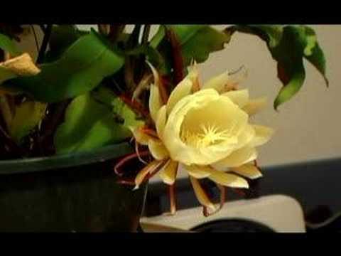 Midnight Flower by Loafia on DeviantArt