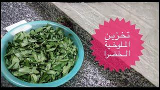 Gambar cover طريقة تخزين الملوخية الخضرا بدون مخرطة ولا مفرمة