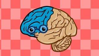 중요한 뇌 | 뇌의 다양한 역할과 기능 | 인체박사★지니키즈