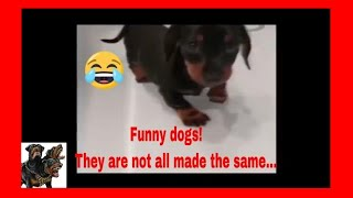 Try not to laugh Funny Dogs compilation cerberusk9uk